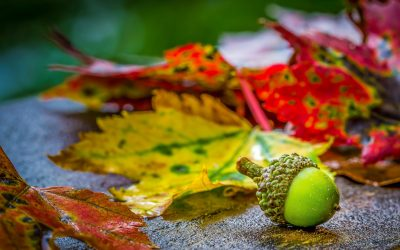 Get good habits before autumn hits